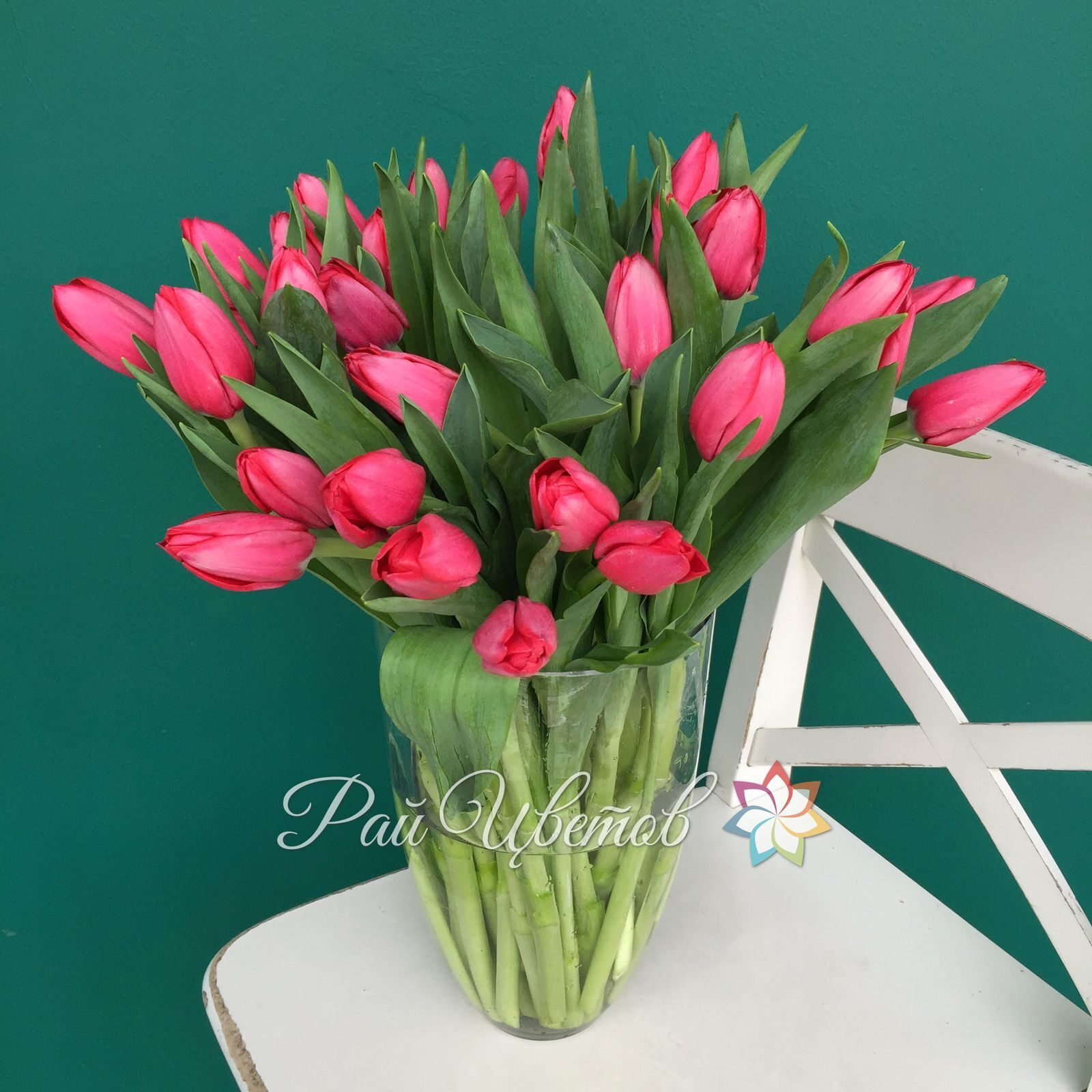 Цвета на тюльпанах